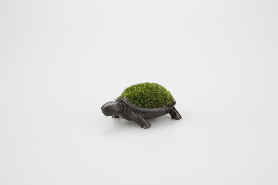 50406_turtle_bronze